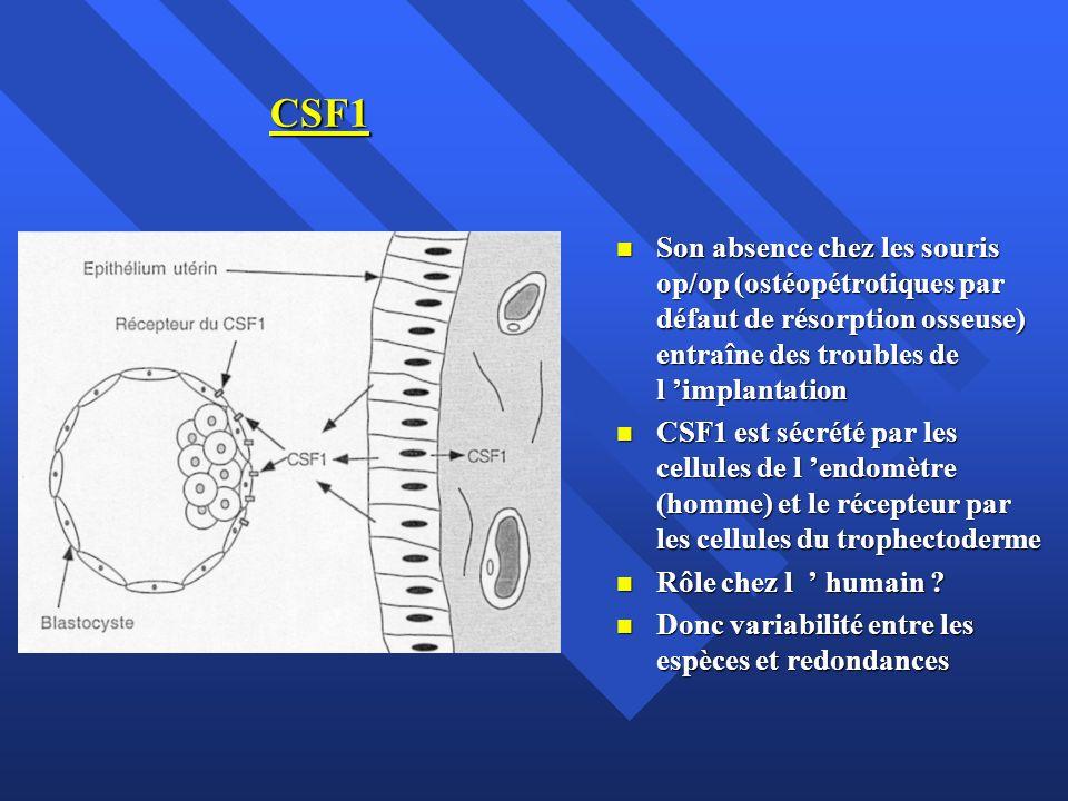 CSF1 Son absence chez les souris op/op (ostéopétrotiques par défaut de résorption osseuse) entraîne des troubles de l implantation Son absence chez le