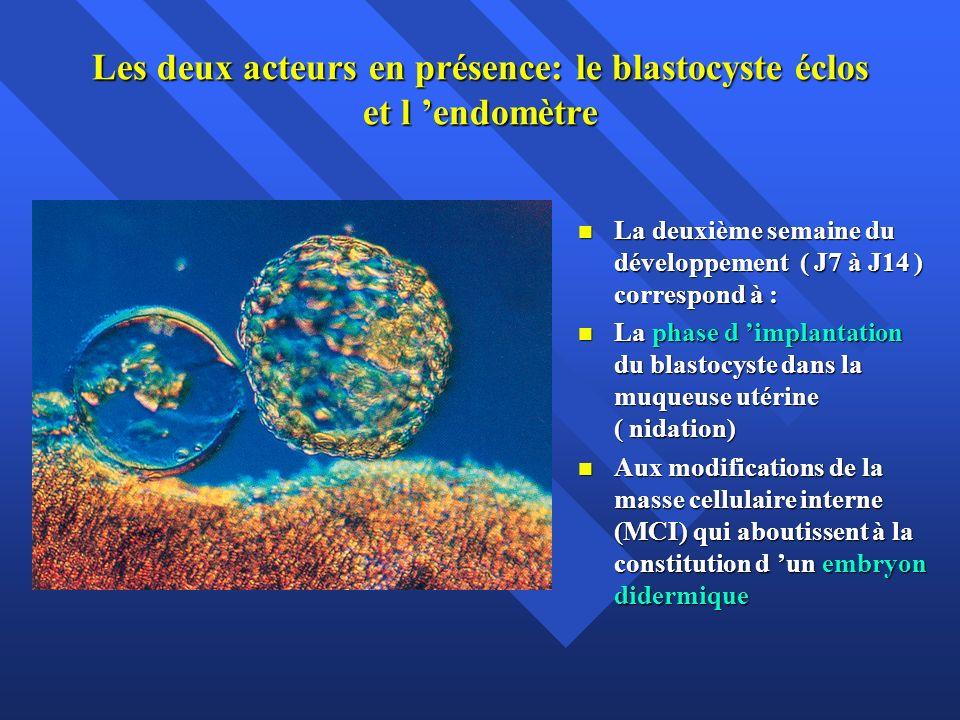 Les deux acteurs en présence: le blastocyste éclos et l endomètre La deuxième semaine du développement ( J7 à J14 ) correspond à : La deuxième semaine