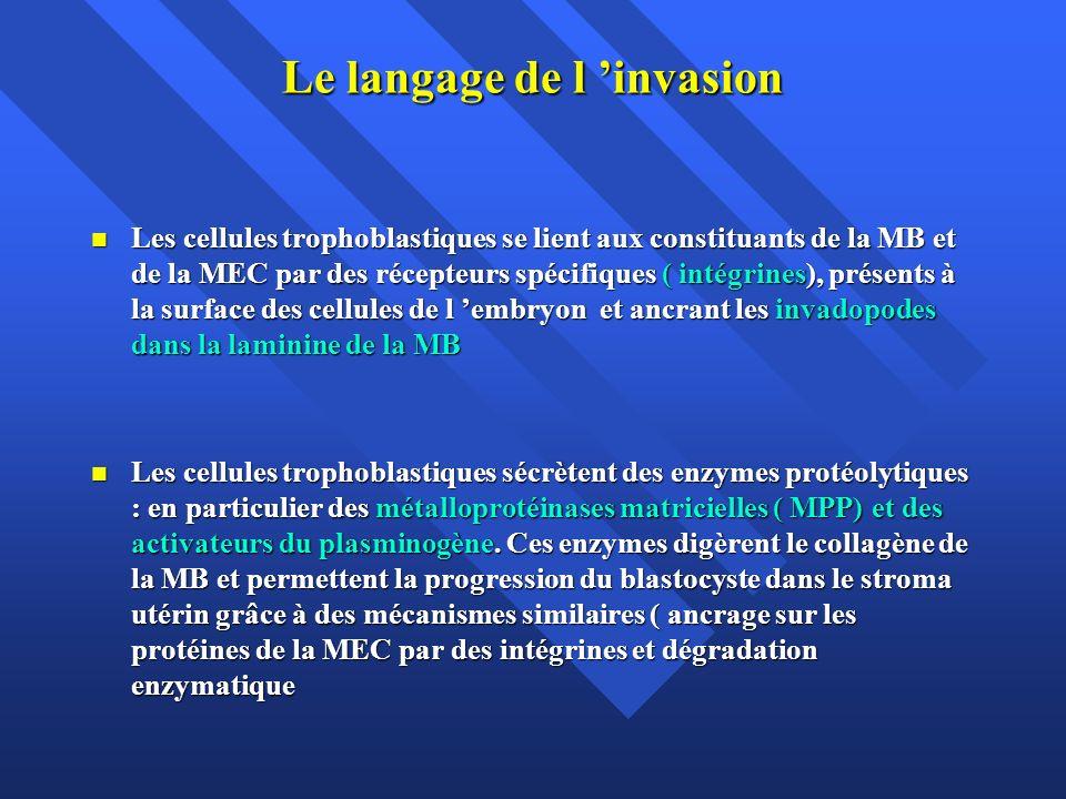 Le langage de l invasion Les cellules trophoblastiques se lient aux constituants de la MB et de la MEC par des récepteurs spécifiques ( intégrines), p