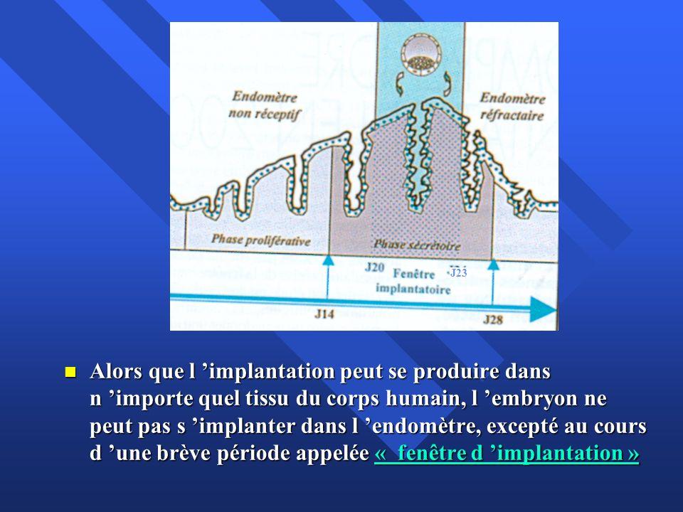 La fenêtre d implantation ( FI) survient pendant la phase lutéale du cycle menstruel La fenêtre d implantation ( FI) survient pendant la phase lutéale du cycle menstruel Elle est limitée dans le temps ; durée 3-4 jours; entre J20 et J23 et correspond à une période de réceptivité de la muqueuse utérine Elle est limitée dans le temps ; durée 3-4 jours; entre J20 et J23 et correspond à une période de réceptivité de la muqueuse utérine Elle est hormonalement définie : endomètre préparé par les estrogènes de la phase folliculaire (endomètre prolifératif ) et transformé par la progestérone de la phase lutéale (endomètre sécrétoire ).