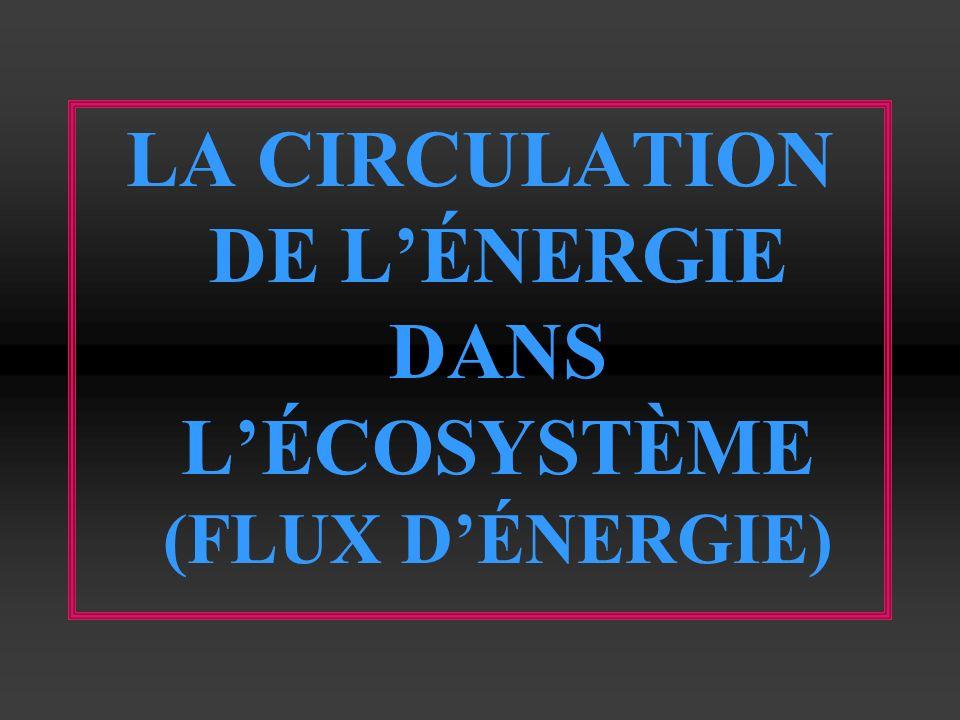 LA CIRCULATION DE LÉNERGIE DANS LÉCOSYSTÈME (FLUX DÉNERGIE)