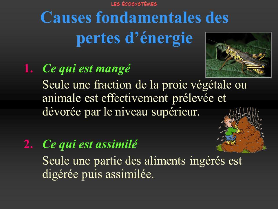 Causes fondamentales des pertes dénergie 1. Ce qui est mangé Seule une fraction de la proie végétale ou animale est effectivement prélevée et dévorée
