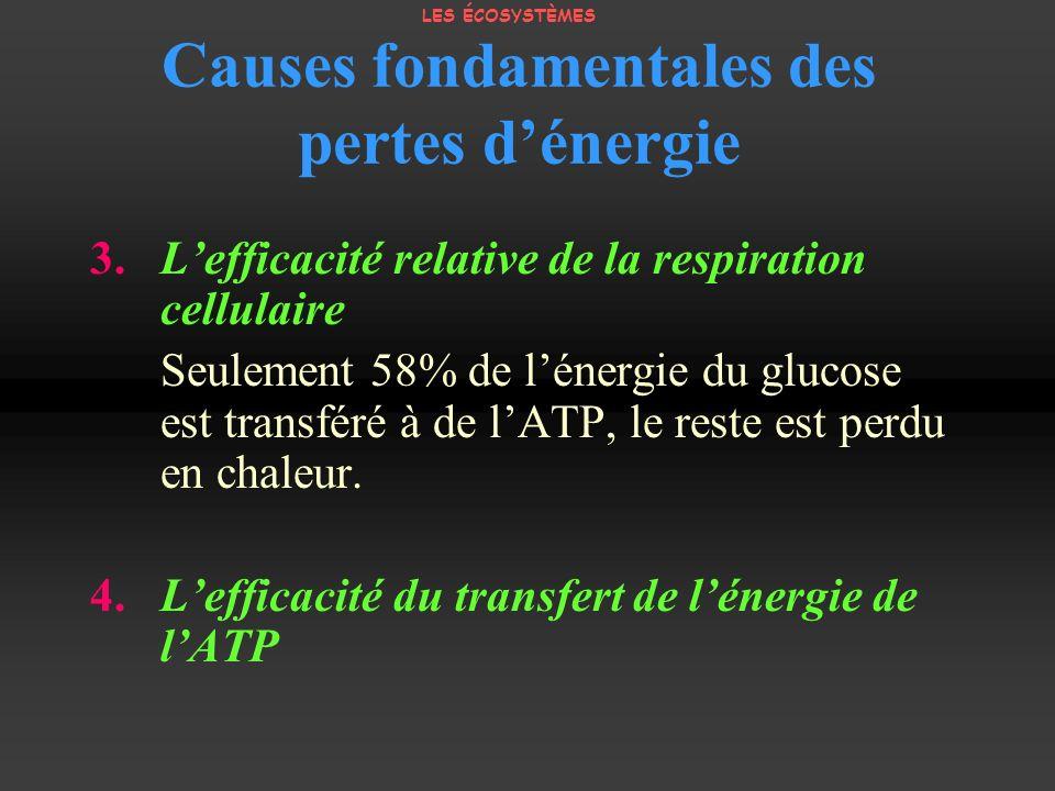 Causes fondamentales des pertes dénergie 3. Lefficacité relative de la respiration cellulaire Seulement 58% de lénergie du glucose est transféré à de