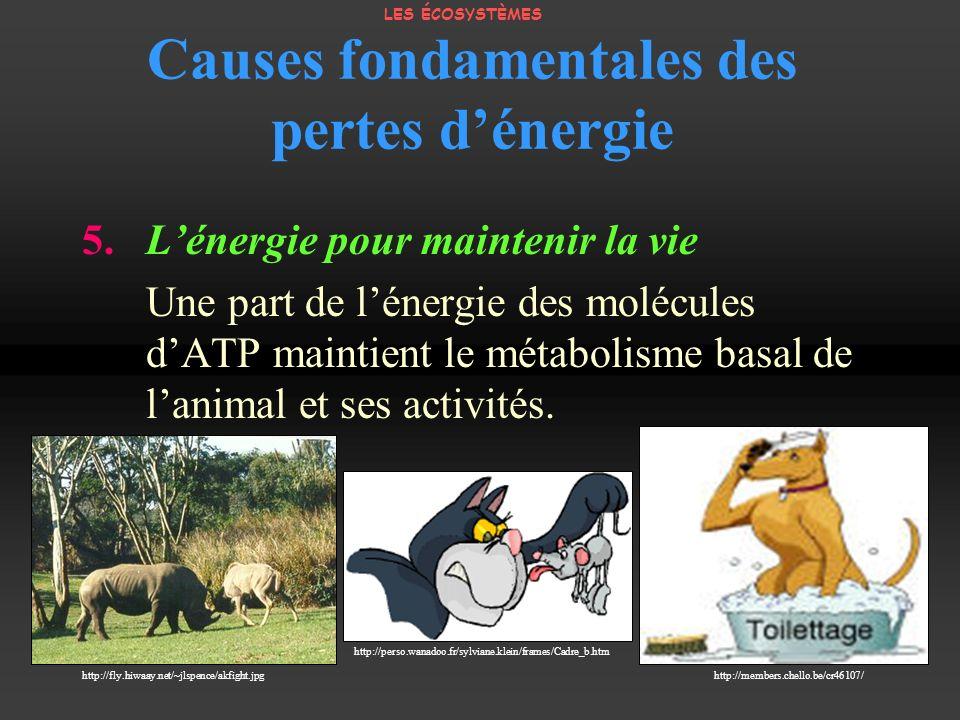 Causes fondamentales des pertes dénergie 5. Lénergie pour maintenir la vie Une part de lénergie des molécules dATP maintient le métabolisme basal de l