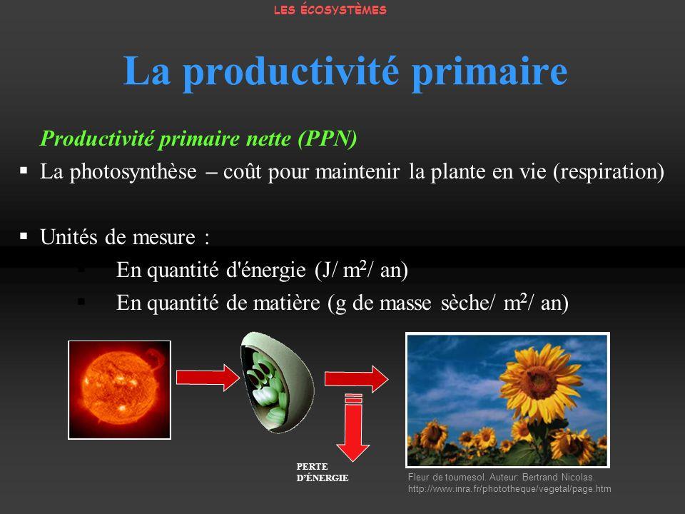 Fleur de tournesol. Auteur: Bertrand Nicolas. http://www.inra.fr/phototheque/vegetal/page.htm PERTE DÉNERGIE Productivité primaire nette (PPN) La phot
