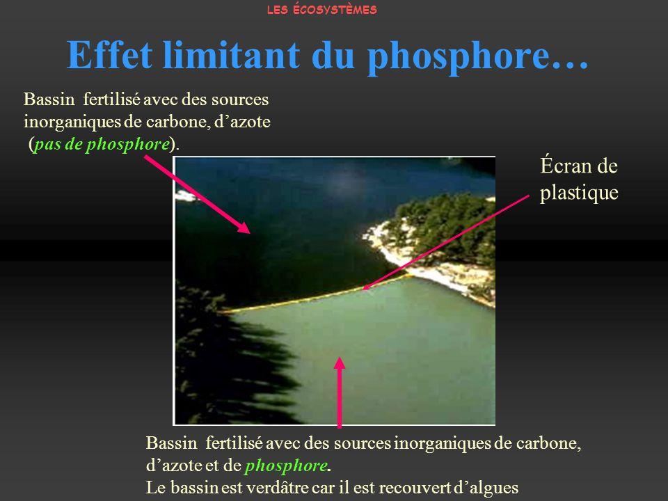 Effet limitant du phosphore… Bassin fertilisé avec des sources inorganiques de carbone, dazote (pas de phosphore). Bassin fertilisé avec des sources i