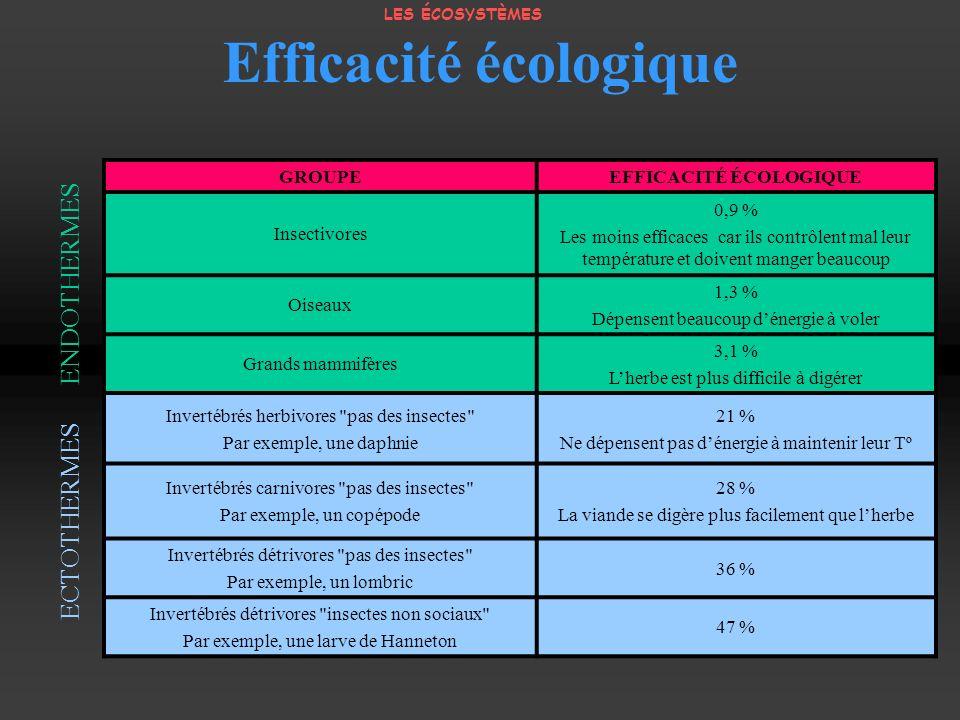 Efficacité écologique GROUPEEFFICACITÉ ÉCOLOGIQUE Insectivores 0,9 % Les moins efficaces car ils contrôlent mal leur température et doivent manger bea
