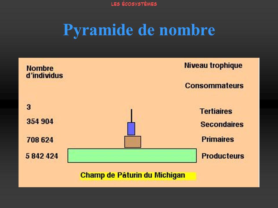 Pyramide de nombre LES ÉCOSYSTÈMES
