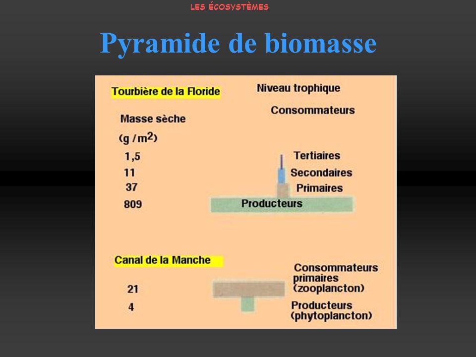 Pyramide de biomasse LES ÉCOSYSTÈMES