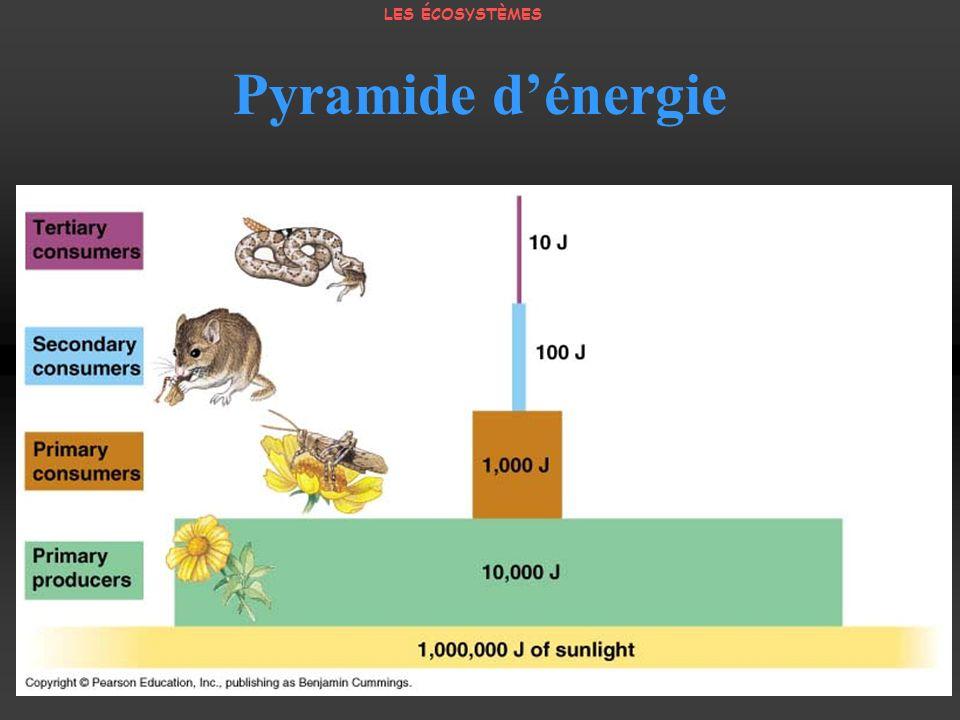 Pyramide dénergie LES ÉCOSYSTÈMES