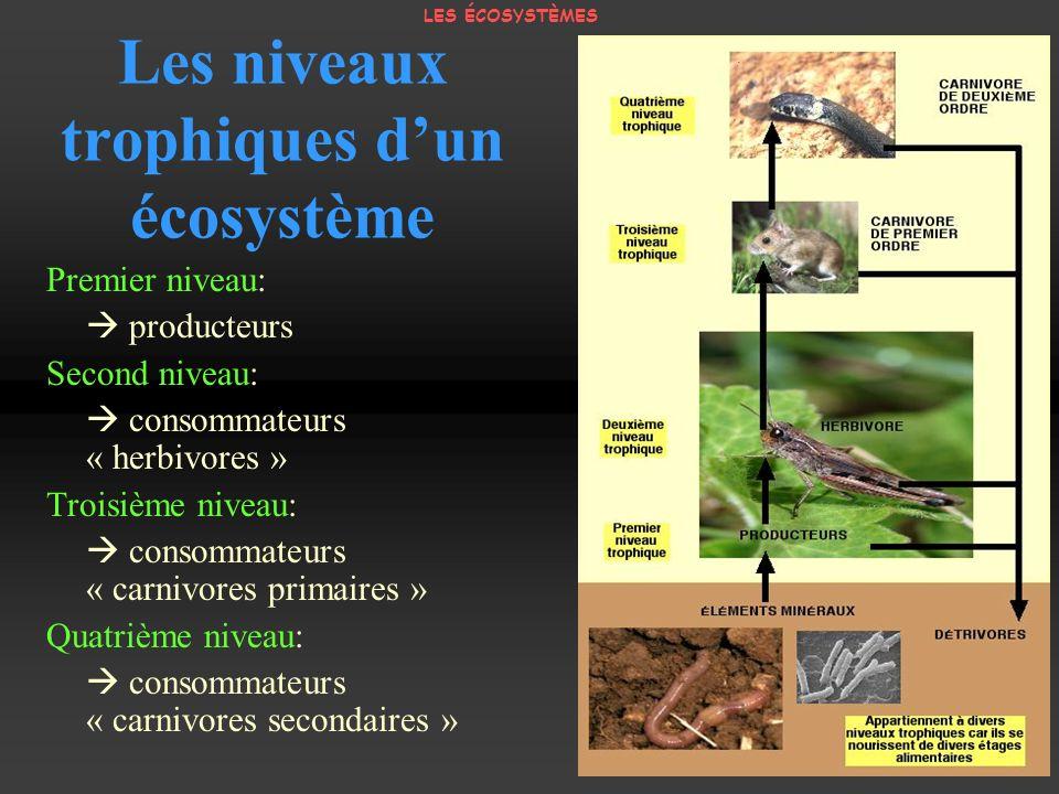 Les niveaux trophiques dun écosystème Premier niveau: producteurs Second niveau: consommateurs « herbivores » Troisième niveau: consommateurs « carniv