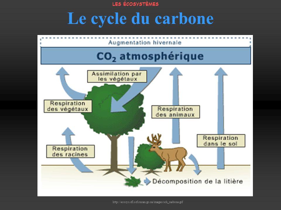 Le cycle du carbone LES ÉCOSYSTÈMES http://ecosys.cfl.scf.rncan.gc.ca/images/sch_carbone.gif