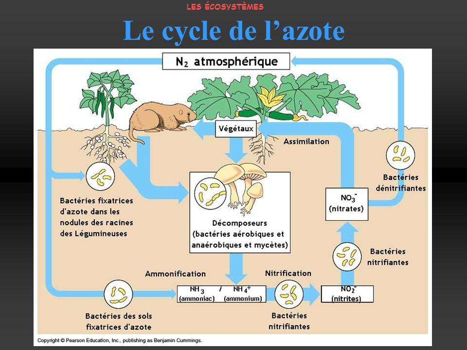 Le cycle de lazote LES ÉCOSYSTÈMES