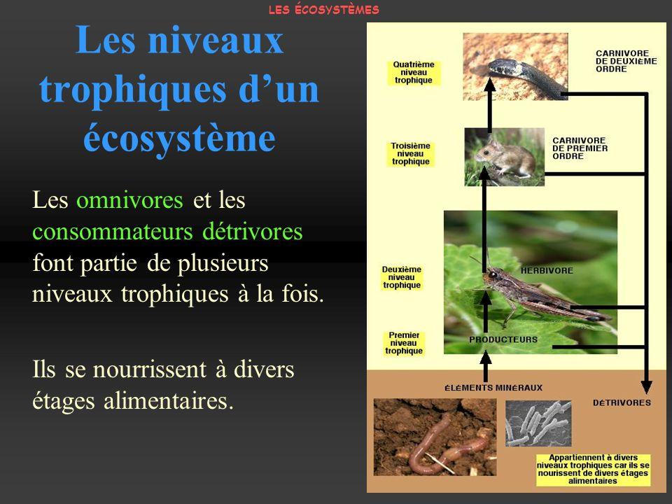 Les niveaux trophiques dun écosystème Les omnivores et les consommateurs détrivores font partie de plusieurs niveaux trophiques à la fois. Ils se nour