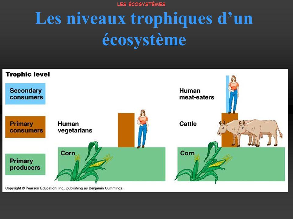 Les niveaux trophiques dun écosystème LES ÉCOSYSTÈMES
