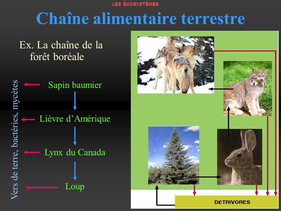 Chaîne alimentaire terrestre Ex. La chaîne de la forêt boréale Sapin baumier Lièvre dAmérique Lynx du Canada Loup Vers de terre, bactéries, mycètes LE