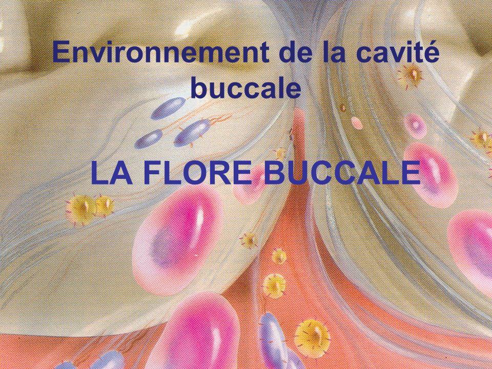 Environnement de la cavité buccale LA FLORE BUCCALE