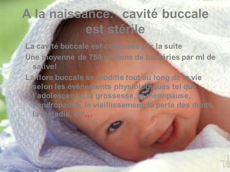 A la naissance: cavité buccale est stérile La cavité buccale est colonisée par la suite Une moyenne de 750 millions de bactéries par ml de salive.