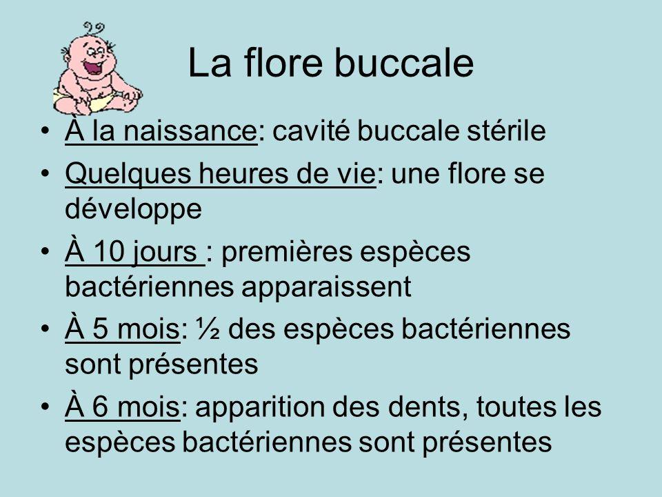 La flore buccale À la naissance: cavité buccale stérile Quelques heures de vie: une flore se développe À 10 jours : premières espèces bactériennes apparaissent À 5 mois: ½ des espèces bactériennes sont présentes À 6 mois: apparition des dents, toutes les espèces bactériennes sont présentes