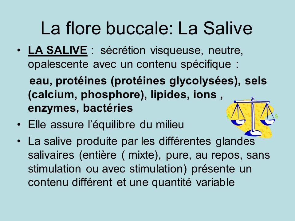 La flore buccale: La Salive LA SALIVE : sécrétion visqueuse, neutre, opalescente avec un contenu spécifique : eau, protéines (protéines glycolysées), sels (calcium, phosphore), lipides, ions, enzymes, bactéries Elle assure léquilibre du milieu La salive produite par les différentes glandes salivaires (entière ( mixte), pure, au repos, sans stimulation ou avec stimulation) présente un contenu différent et une quantité variable
