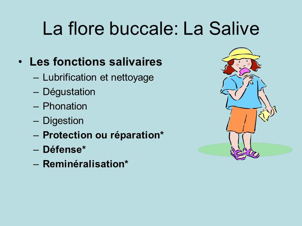 La flore buccale: La Salive Les fonctions salivaires –Lubrification et nettoyage –Dégustation –Phonation –Digestion –Protection ou réparation* –Défens
