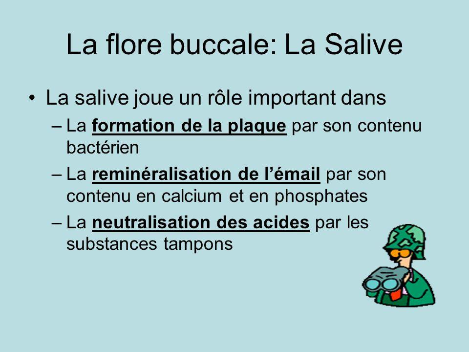 La flore buccale: La Salive La salive joue un rôle important dans –La formation de la plaque par son contenu bactérien –La reminéralisation de lémail par son contenu en calcium et en phosphates –La neutralisation des acides par les substances tampons