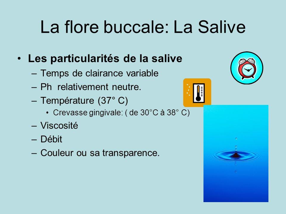 La flore buccale: La Salive Les particularités de la salive –Temps de clairance variable –Ph relativement neutre. –Température (37° C) Crevasse gingiv
