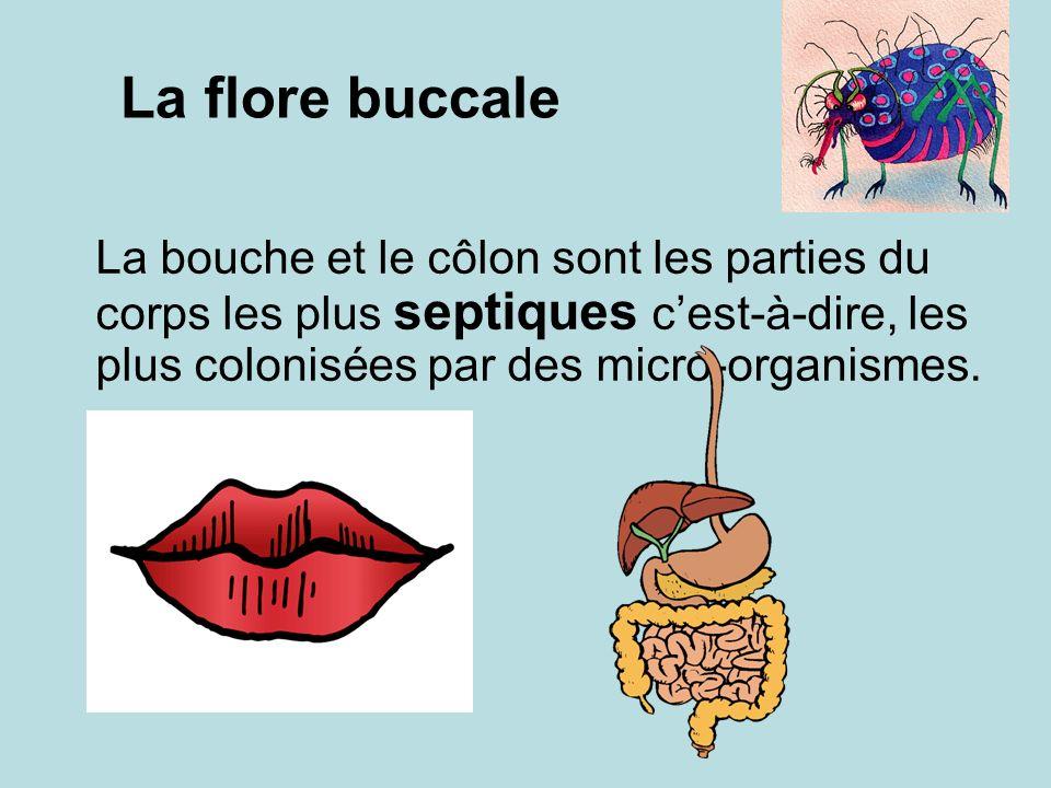 La flore buccale La bouche et le côlon sont les parties du corps les plus septiques cest-à-dire, les plus colonisées par des micro-organismes.
