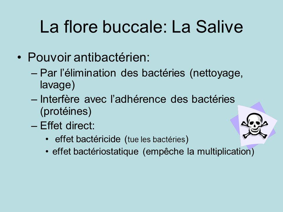 La flore buccale: La Salive Pouvoir antibactérien: –Par lélimination des bactéries (nettoyage, lavage) –Interfère avec ladhérence des bactéries (protéines) –Effet direct: effet bactéricide ( tue les bactéries ) effet bactériostatique (empêche la multiplication)