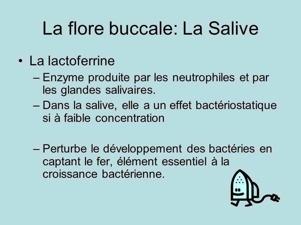 La flore buccale: La Salive La lactoferrine –Enzyme produite par les neutrophiles et par les glandes salivaires. –Dans la salive, elle a un effet bact