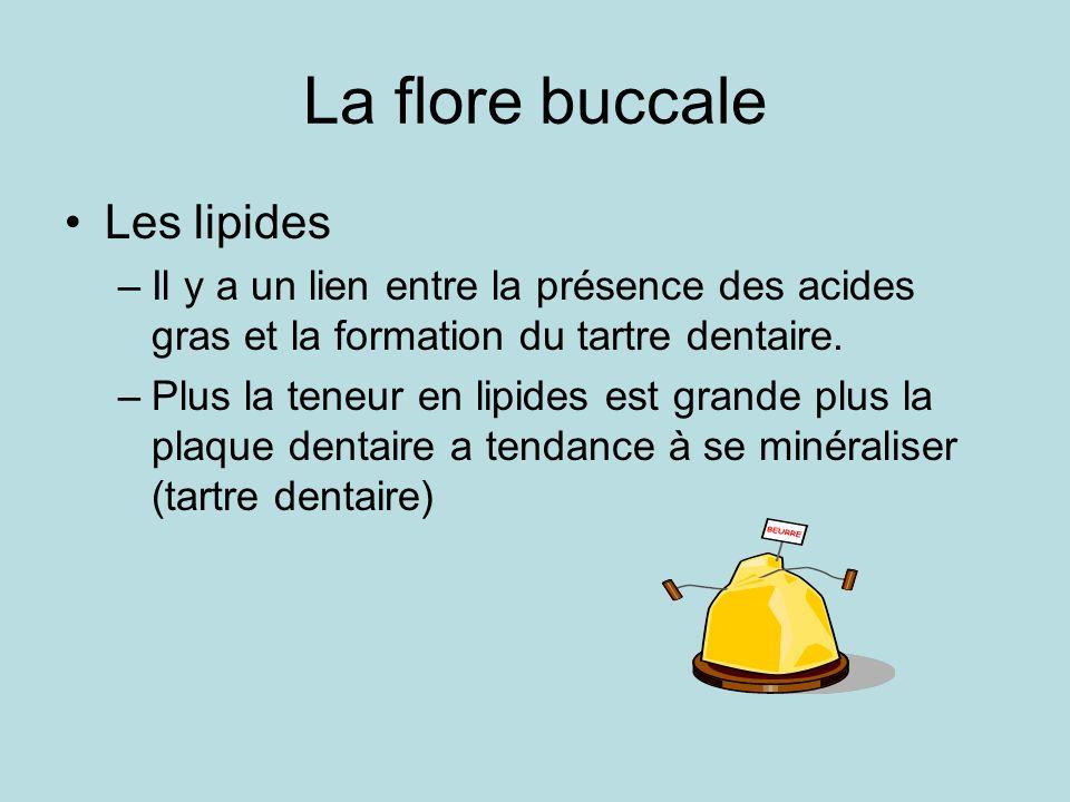La flore buccale Les lipides –Il y a un lien entre la présence des acides gras et la formation du tartre dentaire. –Plus la teneur en lipides est gran