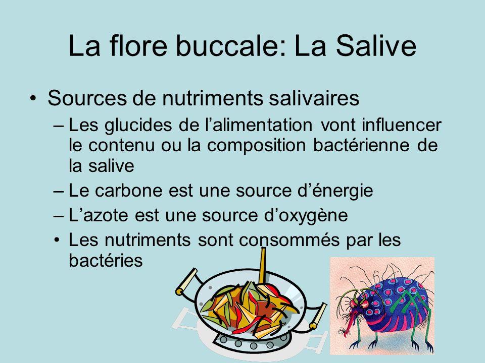 La flore buccale: La Salive Sources de nutriments salivaires –Les glucides de lalimentation vont influencer le contenu ou la composition bactérienne de la salive –Le carbone est une source dénergie –Lazote est une source doxygène Les nutriments sont consommés par les bactéries