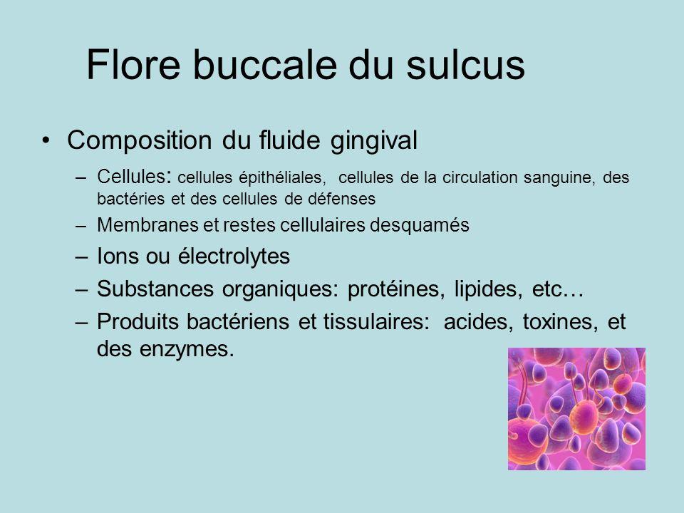 Flore buccale du sulcus Composition du fluide gingival –Cellules : cellules épithéliales, cellules de la circulation sanguine, des bactéries et des ce