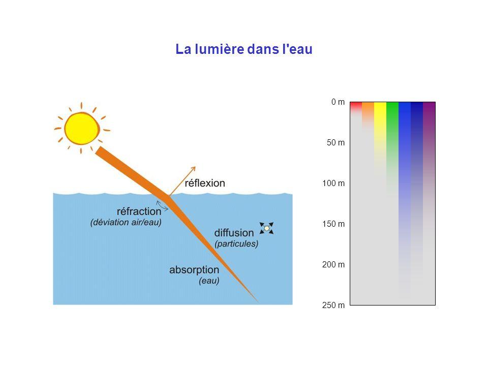 La lumière dans l'eau 0 m 100 m 50 m 200 m 150 m 250 m