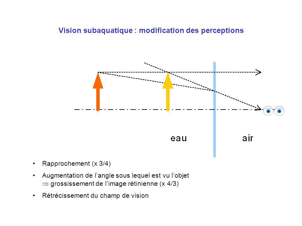 Vision subaquatique : modification des perceptions Rapprochement (x 3/4) Augmentation de langle sous lequel est vu lobjet grossissement de limage réti