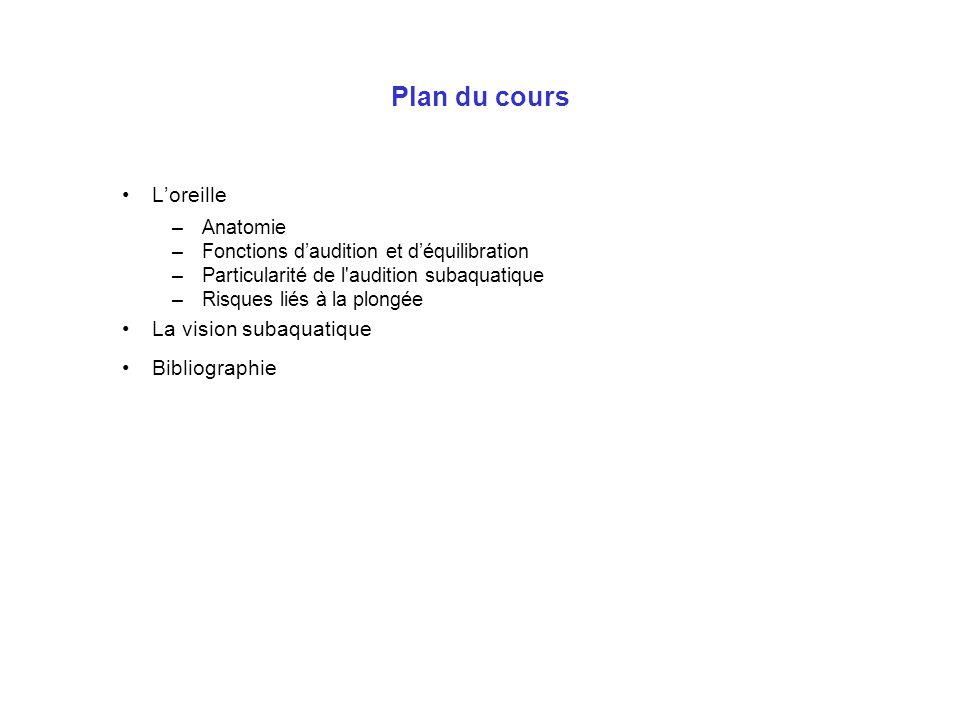 Plan du cours Loreille –Anatomie –Fonctions daudition et déquilibration –Particularité de l'audition subaquatique –Risques liés à la plongée La vision