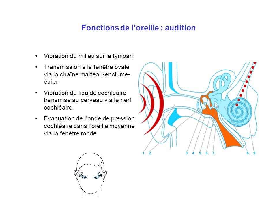 Audition subaquatique Vitesse du son dans l air : 330 m/s Vitesse du son dans leau : 1450 m/s Stéréophonie : –Les 2 oreilles ne sont pas à la même distance de la source –Le cerveau analyse le déphasage entre les 2 oreilles et détermine la direction de la source –Si la vitesse du son augmente, le déphasage diminue et devient imperceptible pour le cerveau perte de la stéréophonie –Transmission osseuse du son aux 2 OI par la boîte crânienne –Le cerveau humain est adapté à une audition stéréophonique aérienne, pas à audition stéréophonique subaquatique !!!