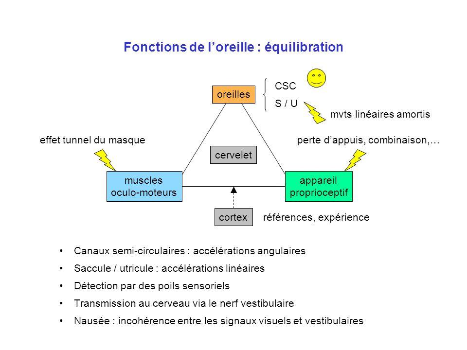 Fonctions de loreille : équilibration Canaux semi-circulaires : accélérations angulaires Saccule / utricule : accélérations linéaires Détection par de