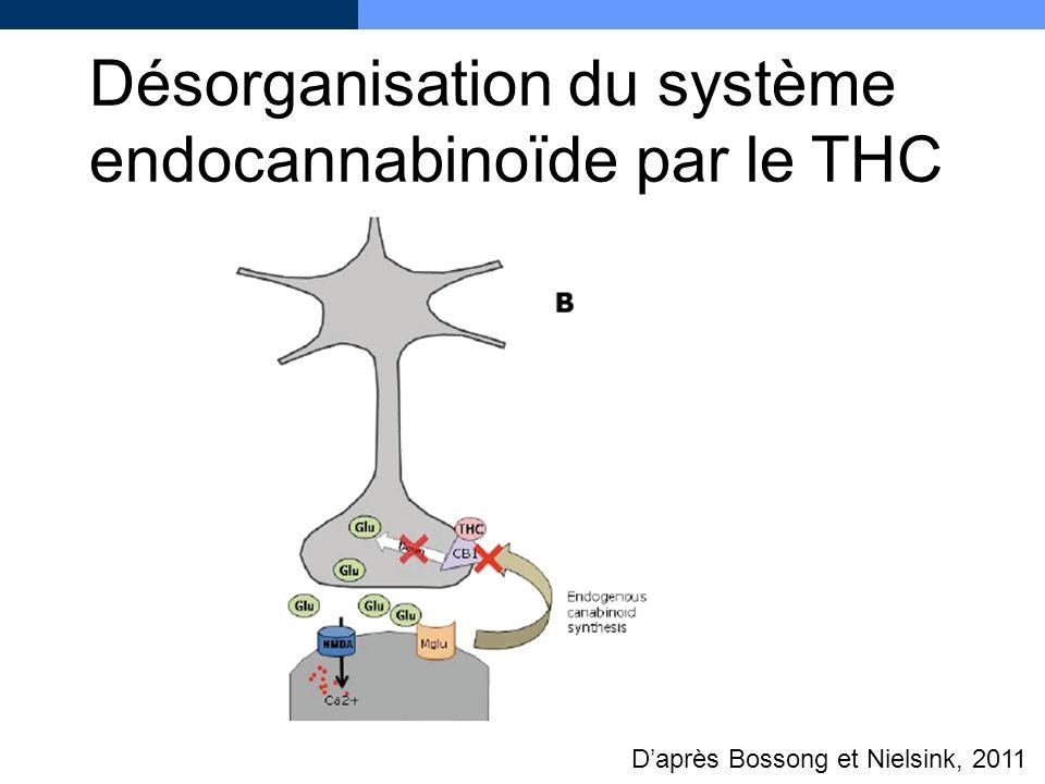 Désorganisation du système endocannabinoïde par le THC Daprès Bossong et Nielsink, 2011