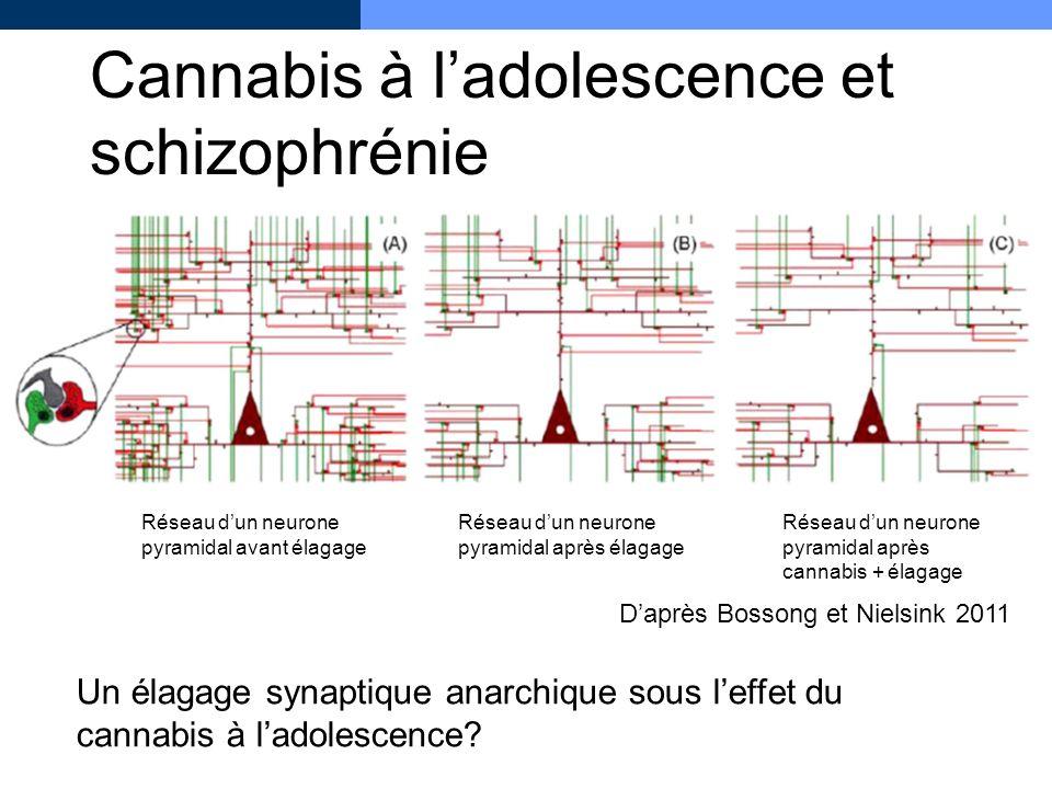 Cannabis à ladolescence et schizophrénie Un élagage synaptique anarchique sous leffet du cannabis à ladolescence? Réseau dun neurone pyramidal avant é