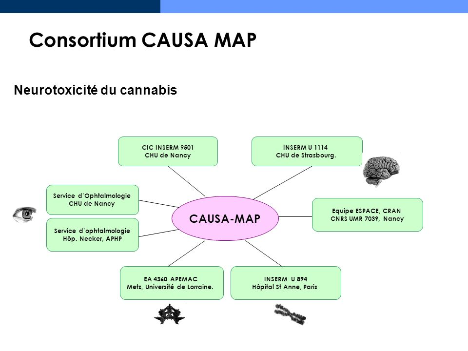 Neurotoxicité du cannabis CAUSA-MAP CIC INSERM 9501 CHU de Nancy EA 4360 APEMAC Metz, Université de Lorraine. INSERM U 1114 CHU de Strasbourg. Service