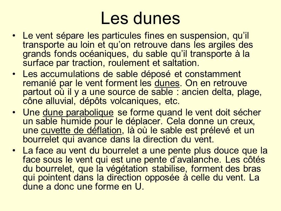 Les dunes Le vent sépare les particules fines en suspension, quil transporte au loin et quon retrouve dans les argiles des grands fonds océaniques, du