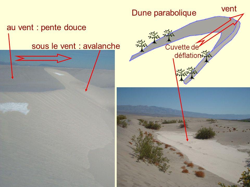 vent Dune parabolique Cuvette de déflation au vent : pente douce sous le vent : avalanche