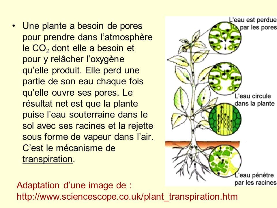 Une plante a besoin de pores pour prendre dans latmosphère le CO 2 dont elle a besoin et pour y relâcher loxygène quelle produit. Elle perd une partie