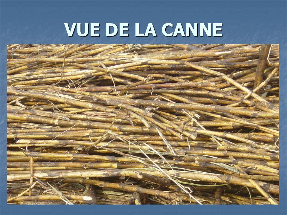 BROYAGE DE LA CANNE ET EXTRACTION DU JUS