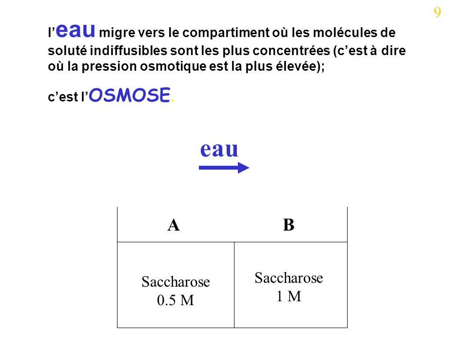 Saccharose 0.5 M Saccharose 1 M AB eau 9 l eau migre vers le compartiment où les molécules de soluté indiffusibles sont les plus concentrées (cest à dire où la pression osmotique est la plus élevée); cest l OSMOSE.
