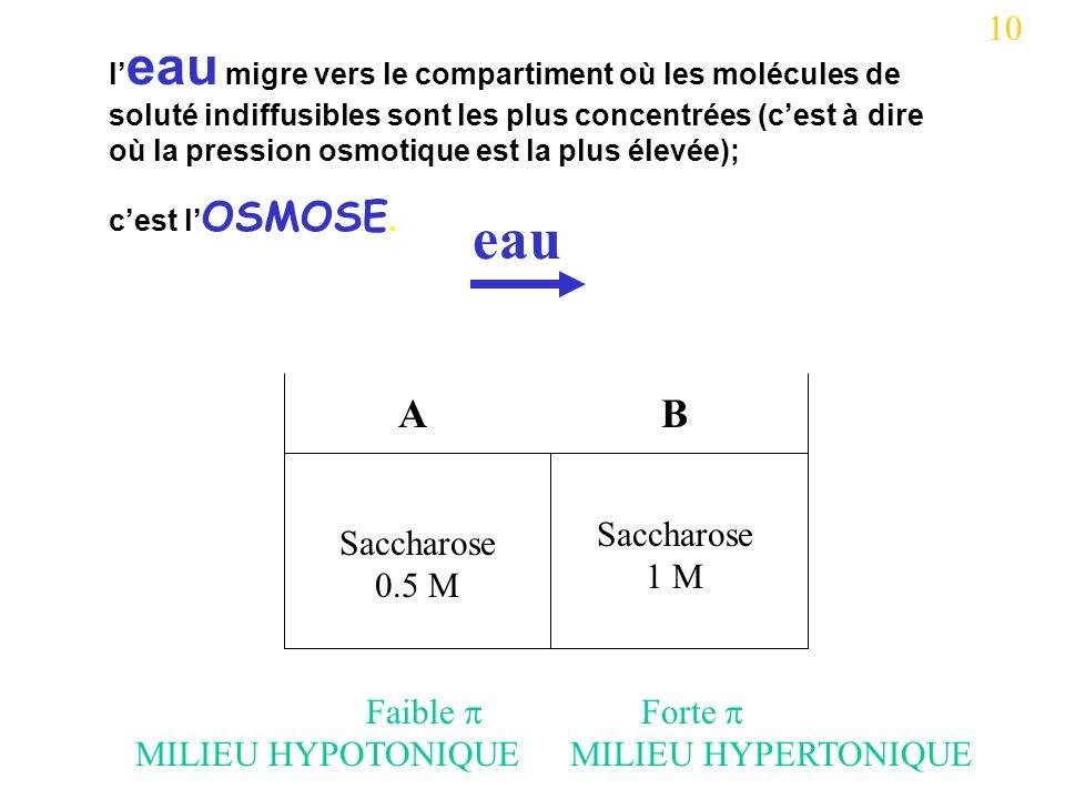 Saccharose 0.5 M Saccharose 1 M AB eau 10 l eau migre vers le compartiment où les molécules de soluté indiffusibles sont les plus concentrées (cest à dire où la pression osmotique est la plus élevée); cest l OSMOSE.