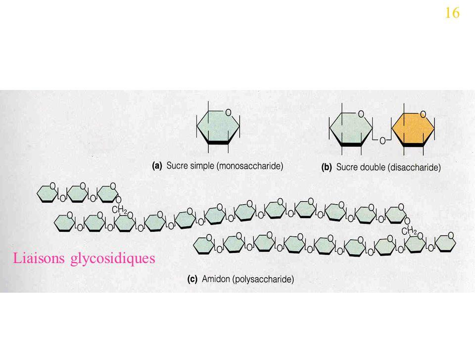 16 Liaisons glycosidiques