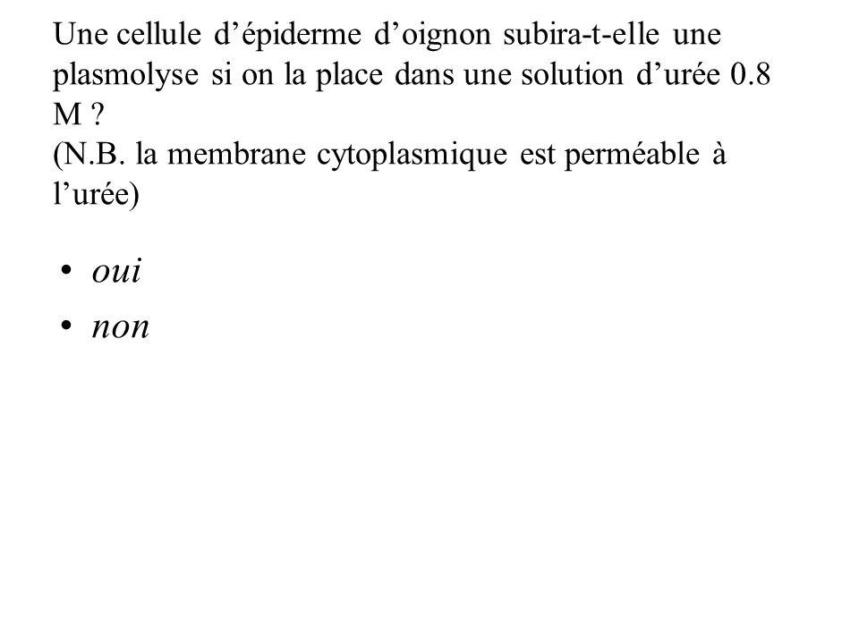 Une cellule dépiderme doignon subira-t-elle une plasmolyse si on la place dans une solution durée 0.8 M .
