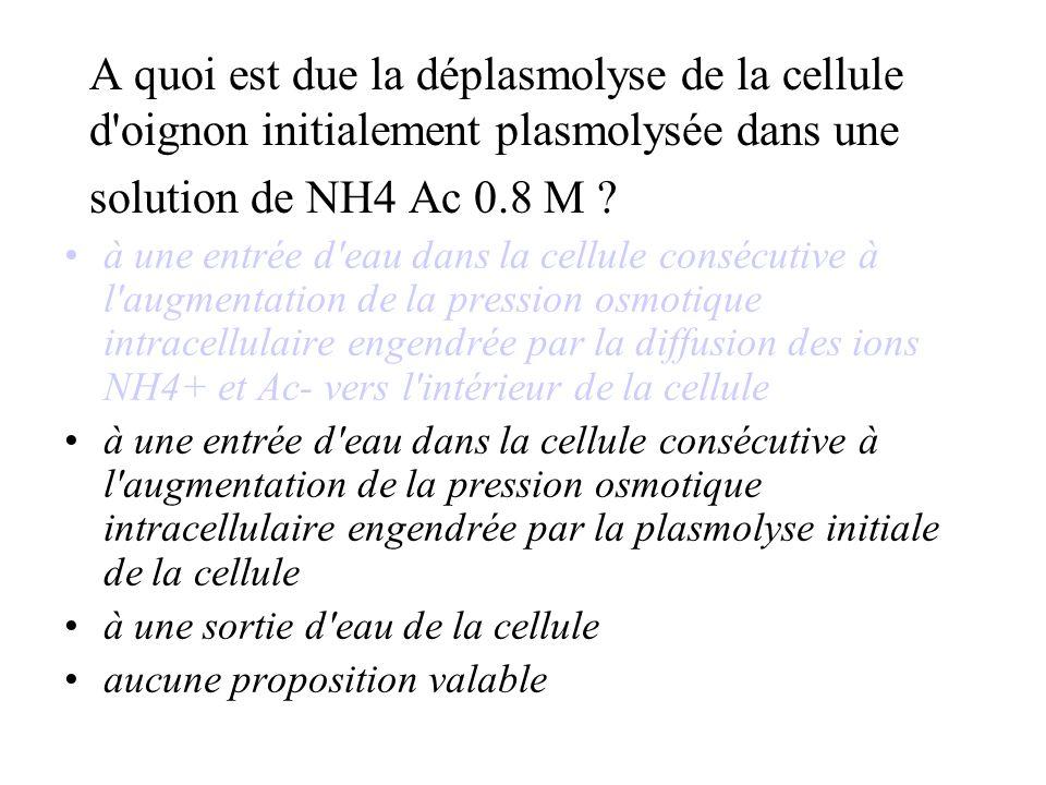 A quoi est due la déplasmolyse de la cellule d oignon initialement plasmolysée dans une solution de NH4 Ac 0.8 M .